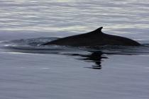 45 dolfijn