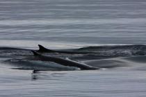 46 dolfijnen