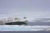52 ijsbeer in landschap