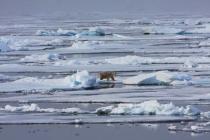 64 ijsbeer